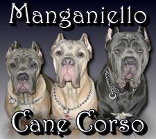 Manganiello Cane Corso
