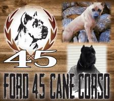 Ford Cane Corso