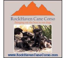 RockHaven Cane Corso