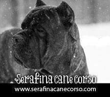 Serafina Cane Corso