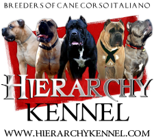 Hierarchy Kennel - Cane Corso Breeder Georgia